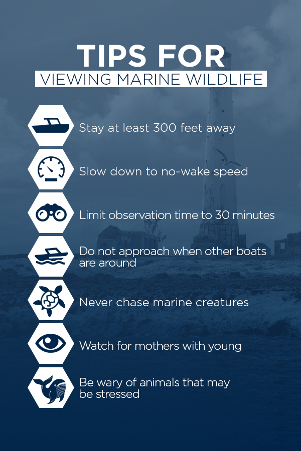 A list of tips for viewing marine wildlife.